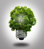 Eco light bulb. And tree Stock Photography