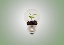 Eco lightbulb Fotografia Stock