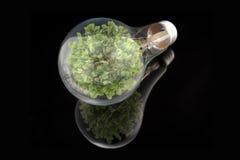 eco lightbulb drzewo Zdjęcia Stock