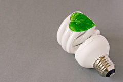 eco  lightbulb with green  leaf Stock Image