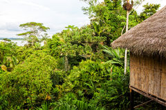 Eco Loge, nationalpark Yasuni royaltyfri fotografi