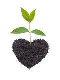 Eco Love Royalty Free Stock Photography