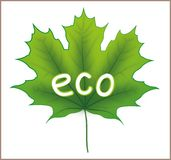 Eco Maple Leaf Stock Photography