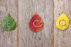 Eco message on the autumn leaves Royalty Free Stock Photo