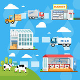 Eco milk manufacturing infographics in flat style Stock Photography