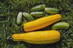 Eco Nahrung. Lizenzfreies Stockbild