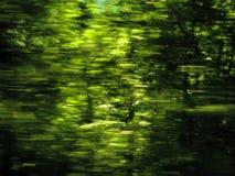Eco natürlicher grüner Hintergrund Lizenzfreie Stockfotografie