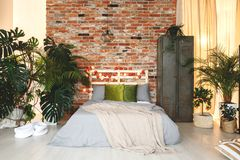 Eco, natural bedchamber. With fancy, exotic plants stock images
