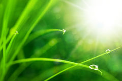 Eco Nature Background with Grass, Sun and Waterdrops Stock Photos
