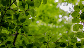 Eco nature. Green and blue abstract defocused background Royalty Free Stock Images
