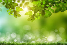Eco nature. / green and blue abstract defocused background with sunshine