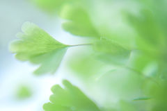 Eco nature green and blue abstract defocused nature background Stock Photography