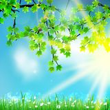 Eco nature / green and blue with sunshine. Stock Images