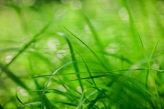 Eco nature green bokeh blur background Stock Photos