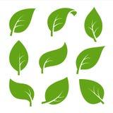 Eco nature green color leaf vector logo flat icon set