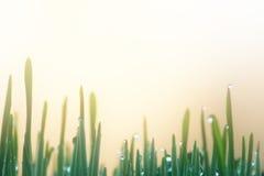 Eco natury tło z trawą, słońcem i Waterdrops, Obraz Royalty Free