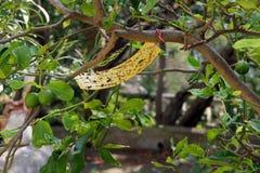 Eco ochrona dla owocowego drzewa Zdjęcie Royalty Free