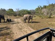 Eco parka narodowego safari obraz royalty free