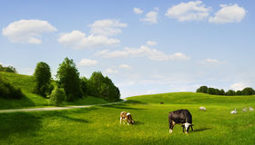 Eco pasture Stock Image
