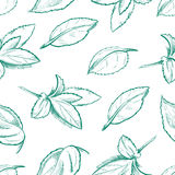Eco peppermint tea, fresh mint leaves, menthol seamless vector background Royalty Free Stock Image