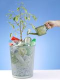 Eco plant Stock Images