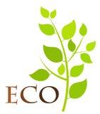 Eco plant Royalty Free Stock Photos