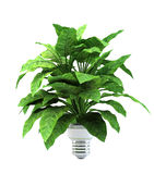 Eco plant Royalty Free Stock Photography