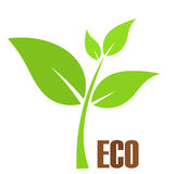 Eco plant. Green young plant. Eco symbol Stock Photography