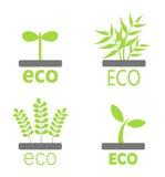 Eco plants Royalty Free Stock Photos