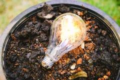 Eco pojęcia pomysłu drzewo i abstrakta lightbulb fotografia stock