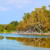 Eco Pond Everglades National Park Royalty Free Stock Images