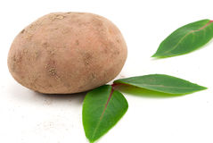 Eco potatoe side view Royalty Free Stock Images