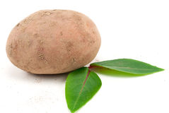 Eco potatoe side view Stock Photos