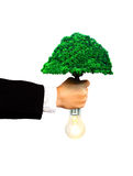 Eco power business. Businessman hold tree and bulb to make clean eco power concept Stock Images