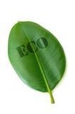 Eco Royalty Free Stock Photo