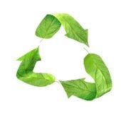 Eco que recicla el símbolo de hojas verdes Imagenes de archivo