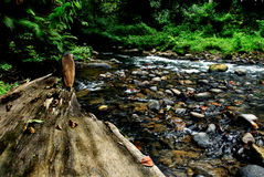 Eco river. Clear flowing river in good eco system Stock Photography