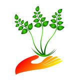 Eco save plant Royalty Free Stock Photography