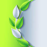 Eco stylish background with green and gray leaf Royalty Free Stock Photo