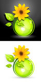 Eco sunflower buttons Stock Photo