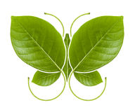Eco symbol green Butterfly. Green leaf Butterfly on white background, eco concept stock photo