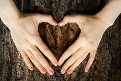 Eco symbol heart shape on a trunk of tree Royalty Free Stock Photography