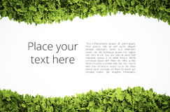 Eco text frame Stock Photo