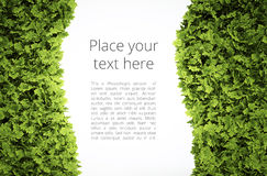 Eco text frame Royalty Free Stock Photos