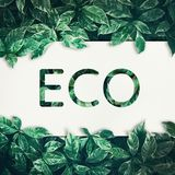 Eco text with green leaf background.friendly,eco Royalty Free Stock Image