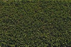 Eco texture, background. Eco texture, background of cut bush Royalty Free Stock Image