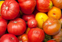 Eco tomatoes Royalty Free Stock Image