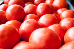 Eco tomatoes pile Stock Image