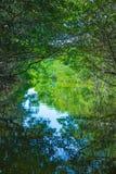 Eco-Tourism mangroves everglades stock photos
