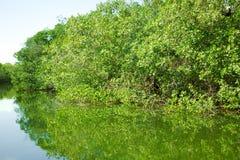 Eco-Tourism mangroves everglades royalty free stock photos